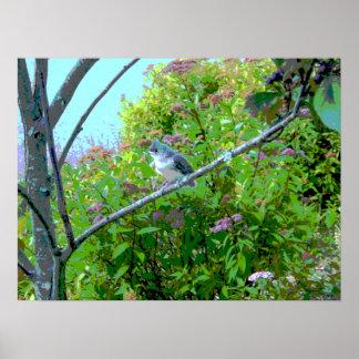 Pájaro de bebé del novato del Titmouse copetudo Póster