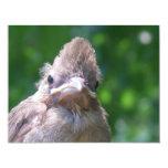 pájaro de bebé enojado invitación 10,8 x 13,9 cm