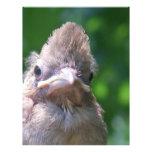 pájaro de bebé enojado membrete personalizado