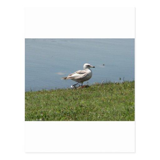 pájaro de bebé postales