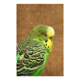 Pájaro de Budgie Papeleria Personalizada