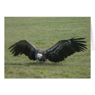 pájaro de buitre negro de la tarjeta del arte de