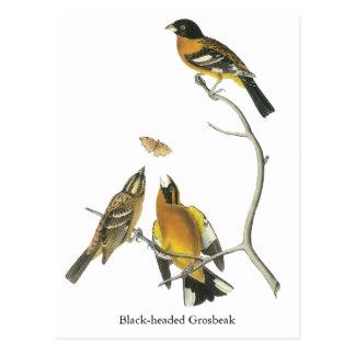 Pájaro de cabeza negra de Audubon Tarjeta Postal