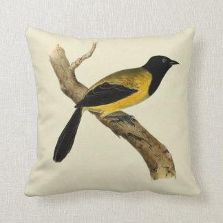 Pájaro de cabeza negra de Oriole del vintage Cojines