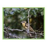 Pájaro de cabeza negra encaramado en el miembro de tarjetas postales