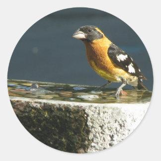 Pájaro de cabeza negra lindo pegatina redonda