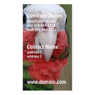 Pájaro de Conure Tarjetas De Visita