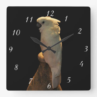 Pájaro de encargo del cockatoo que presenta en la relojes de pared