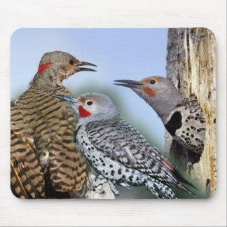 Pájaro de estado de Alabama - parpadeo septentrion Tapetes De Ratones