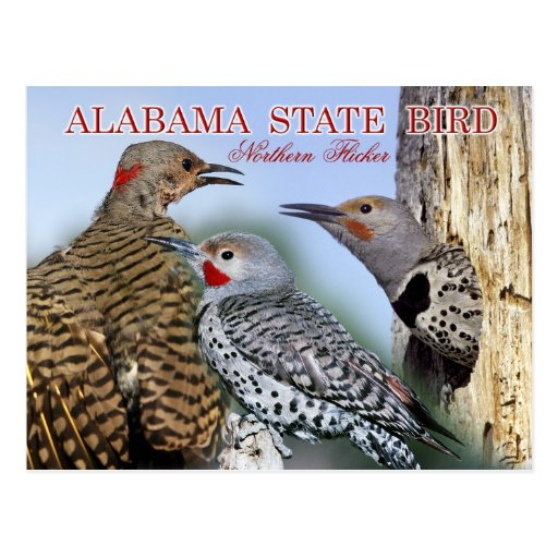 Pájaro de estado de Alabama - parpadeo septentrion Postales