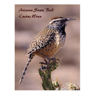 Pájaro de estado de Arizona - postal del Wren de