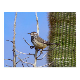 Pájaro de estado de Arizona Tarjetas Postales