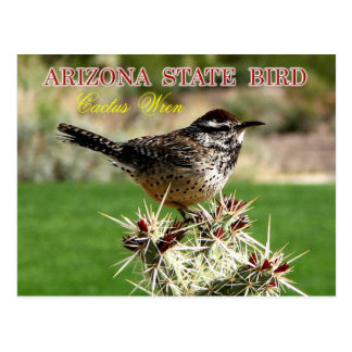 Pájaro de estado de Arizona - Wren de cactus Postales