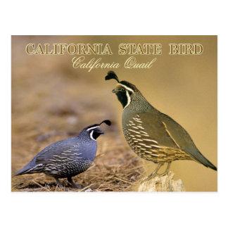 Pájaro de estado de California - codorniz de Tarjeta Postal