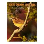 Pájaro de estado de Carolina del Sur: Wren de Postal