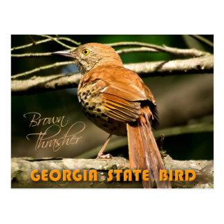 Pájaro de estado de Georgia - Brown Thrasher Tarjetas Postales