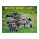 Pájaro de estado de Hawaii - Nene o ganso hawaiano Tarjeta Postal