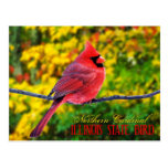 Pájaro de estado de Illinois - cardenal septentrio Postal