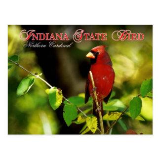 Pájaro de estado de Indiana - cardenal Postal
