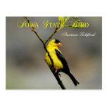 Pájaro de estado de Iowa - Goldfinch americano Postal