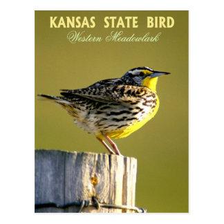 Pájaro de estado de Kansas - Meadowlark occidental Tarjetas Postales