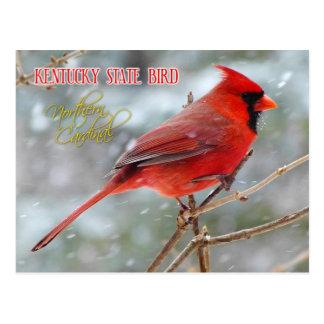 Pájaro de estado de Kentucky - cardenal septentrio Postal