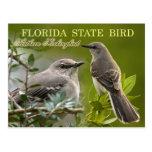 Pájaro de estado de la Florida - Mockingbird Postales