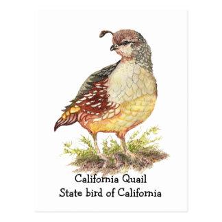 Pájaro de estado de las codornices de California d Postal