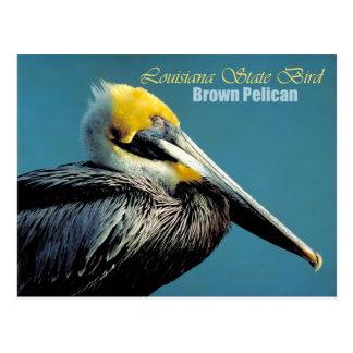 Pájaro de estado de Luisiana - pelícano de Brown Postal