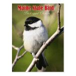 Pájaro de estado de Maine - Chickadee Negro-capsul Tarjeta Postal
