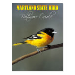 Pájaro de estado de Maryland - Baltimore Oriole Tarjeta Postal