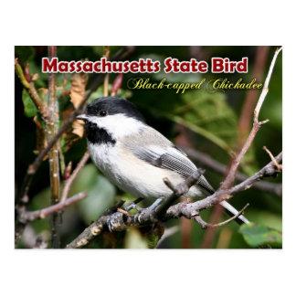 Pájaro de estado de Massachusetts - Chickadee Negr Tarjeta Postal