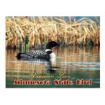 Pájaro de estado de Minnesota - bribón común Postal