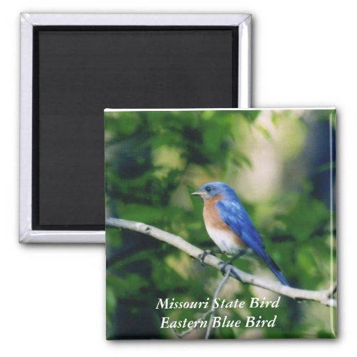 Pájaro de estado de Missouri Bl del este… Iman De Nevera