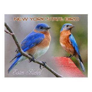 Pájaro de Estado de Nuevo York - Bluebird del este Tarjeta Postal