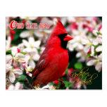 Pájaro de estado de Ohio - cardenal septentrional Tarjeta Postal