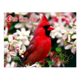 Pájaro de estado de Ohio - cardenal septentrional Tarjetas Postales