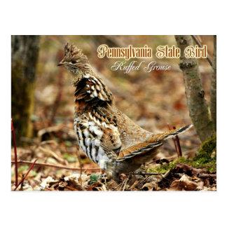 Pájaro de estado de Pennsylvania: Urogallo Tarjetas Postales
