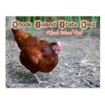 Pájaro de estado de Rhode Island: Rojo de Rhode Postal