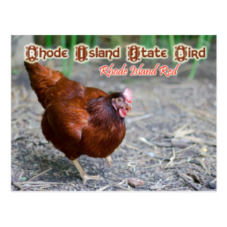 Pájaro de estado de Rhode Island: Rojo de Rhode Tarjeta Postal