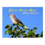 Pájaro de estado de Tejas - Mockingbird septentrio Tarjeta Postal