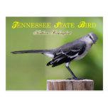 Pájaro de estado de Tennessee - Mockingbird septen Tarjetas Postales