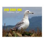 Pájaro de estado de Utah - gaviota de California Tarjeta Postal