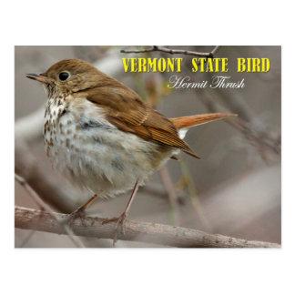 Pájaro de estado de Vermont: Tordo de ermitaño Postal