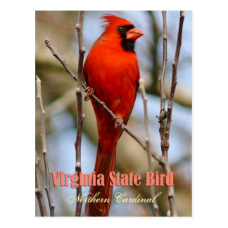 Pájaro de estado de Virginia - cardenal septentrio Postal
