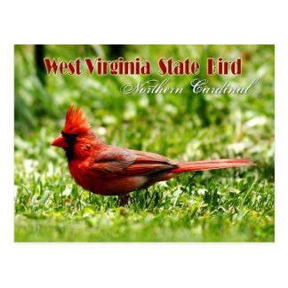 Pájaro de estado de Virginia Occidental - cardenal Postal