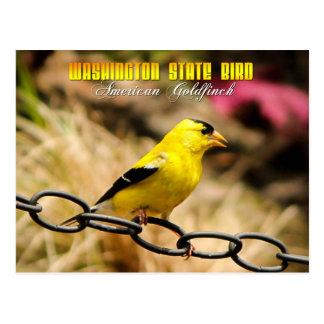 Pájaro de estado de Washington - Goldfinch america Tarjeta Postal