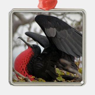 Pájaro de fragata magnífico adorno navideño cuadrado de metal