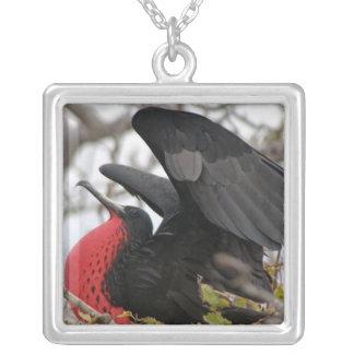 Pájaro de fragata magnífico colgante cuadrado