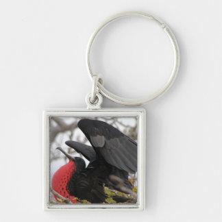 Pájaro de fragata magnífico llavero cuadrado plateado